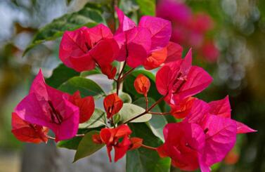 给花浇水可以用茶水吗 浇花水可用热水吗